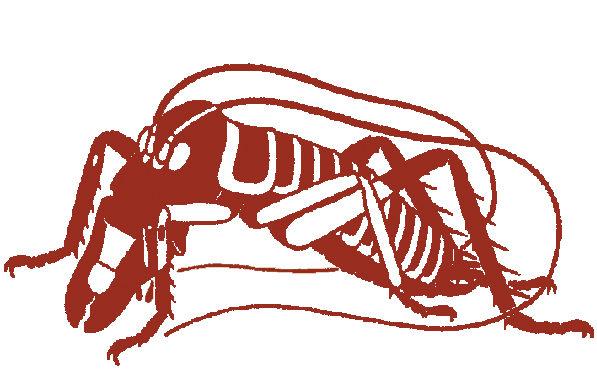 Entomological Society of New Zealand